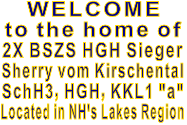 "WELCOME to the home of  2X BSZS HGH Sieger Sherry vom Kirschental SchH3, HGH, KKL1 ""a"" Located in NH's Lakes Region"